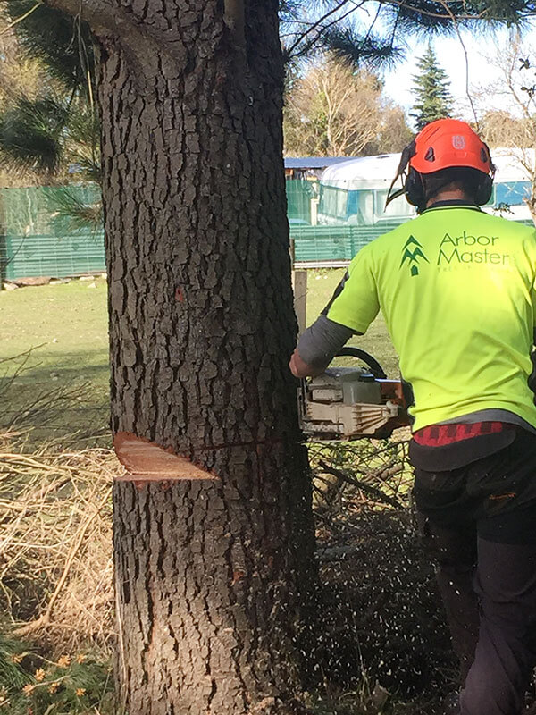 Tree Removal and Tree Felling Christchurch - Arbor Master
