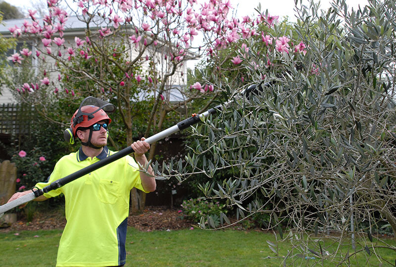 Hedge & Shrub Trimming Christchurch - Arbor Master